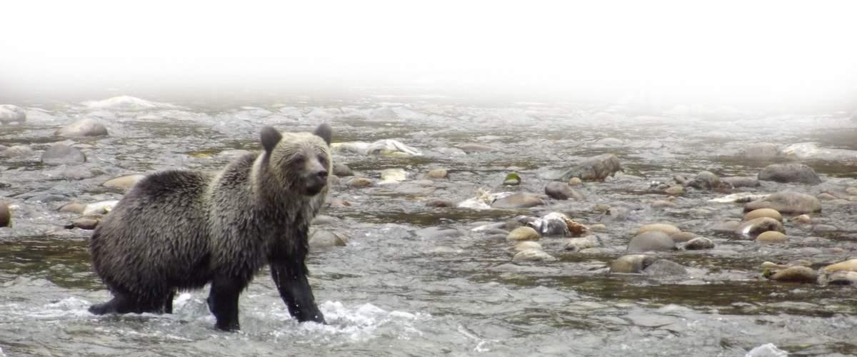 bearslider