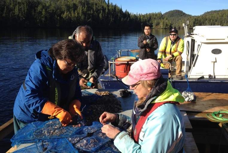 Aquaculture team members sort oysters and put them into clean pearl nets. (From left to right: Dorothy Henderson, Ernie Henderson, Wesley Walkus, Karen Bailey and Albert Charlie).