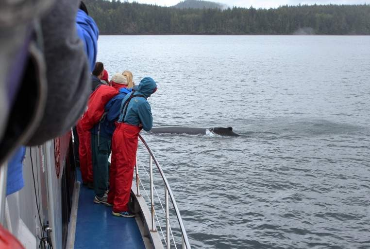 stubbs-island-whale