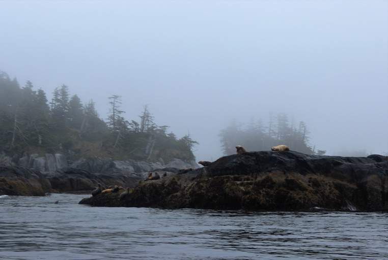 Seals were spotted on a BC Day boat tour of the Nakwakto Rapids.