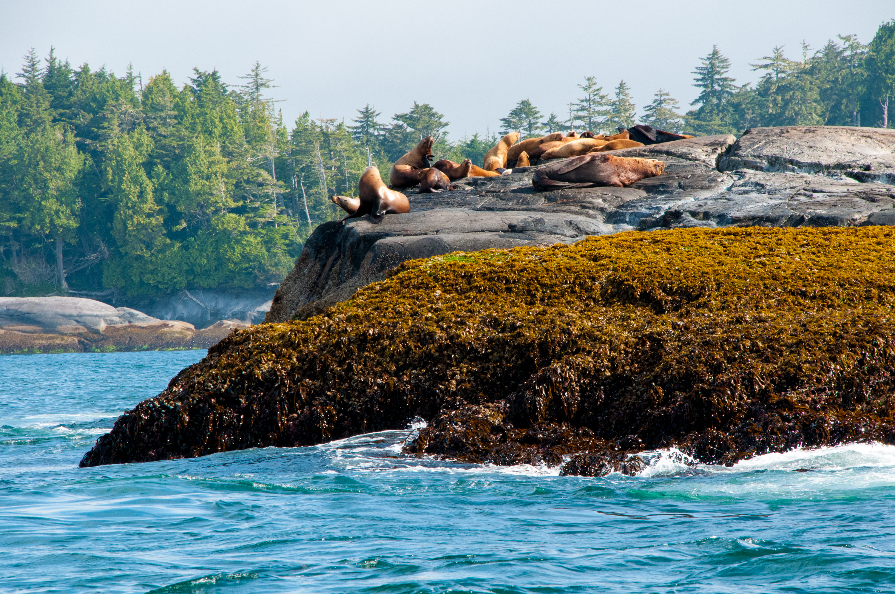 sea lions in the sun